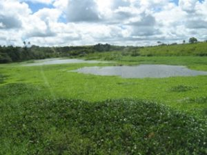The beautiful countryside in Pernambuco.